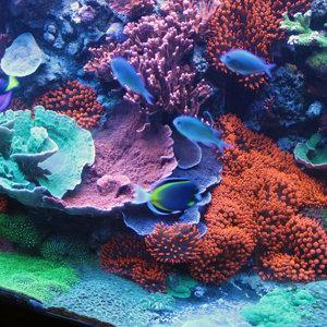 120 Gallon Reef Tank