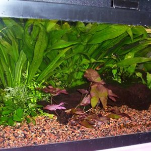 The 20 Gallon long tank - left angle