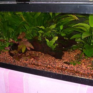 The 20 Gallon long tank - right angle