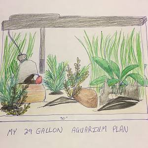 My aquarium plant plan.