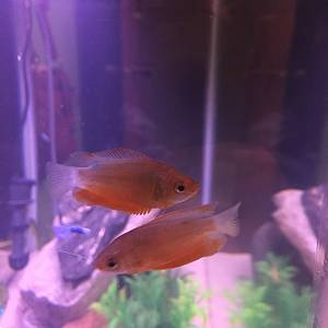 Mango and Martin my newbies!