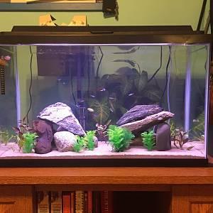 My 29 gallon tank!