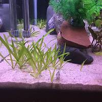 4 month jungle val