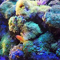 Sunrise-over-the-corals1