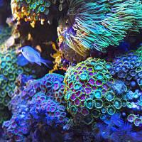 Sunrise-over-the-corals2