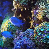 Sunrise-over-the-corals3