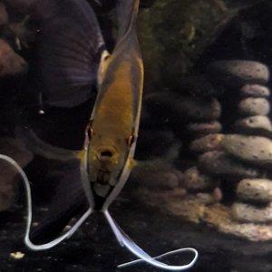 Fancy fin moves