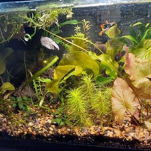 10 gallon planted