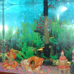 The other corner where my glo light tetras hang out all the time