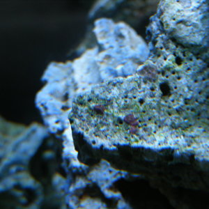 Is this the start of Coraline Algae growth?