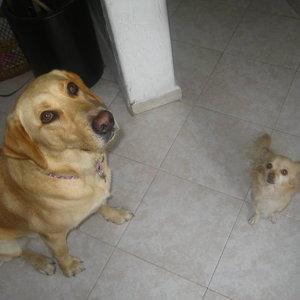 daisy and her cousin maya