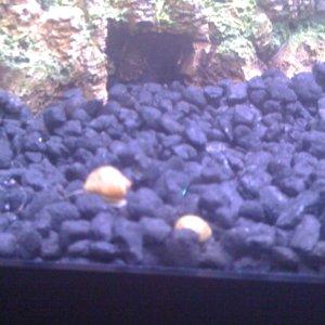 my two tiney snails