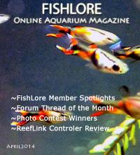 Aquarium Fish Magazine - April 2014