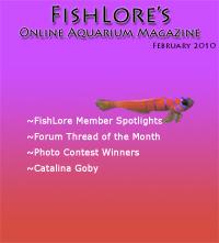 2010 Fish Lore Online Aquarium Magazine