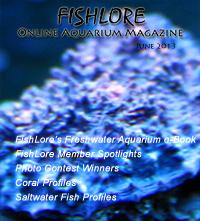 Fish and Aquarium Magazine - June 2013