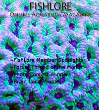 Aquarium Fish Magazine - May 2014