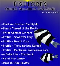 2008 Fish Lore Online Aquarium Magazine