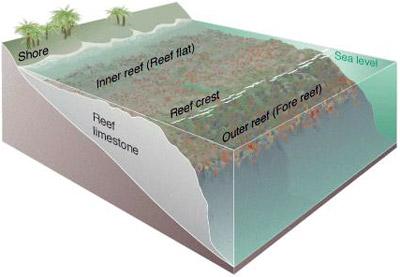Coral Reef Zones