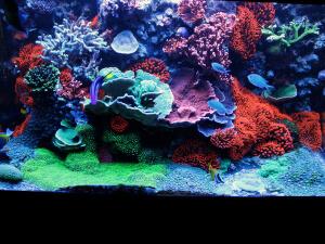my reef tank