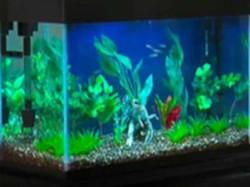 Aquarium Setup