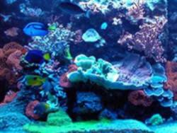 Reef Tank Setup